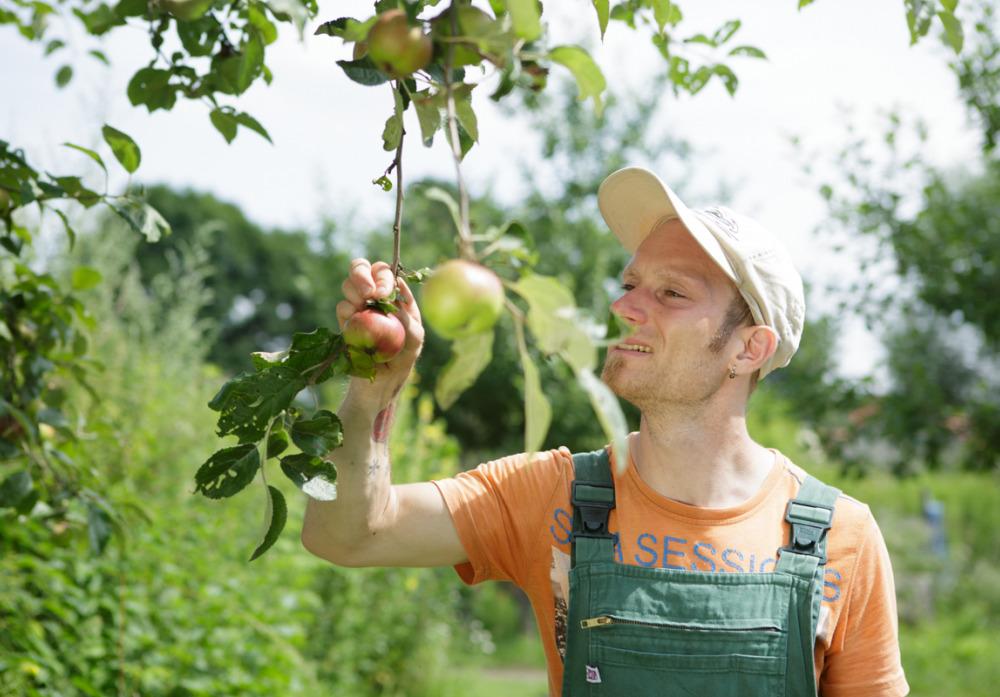 Apfelernte im Stadtgut Blankenfelde