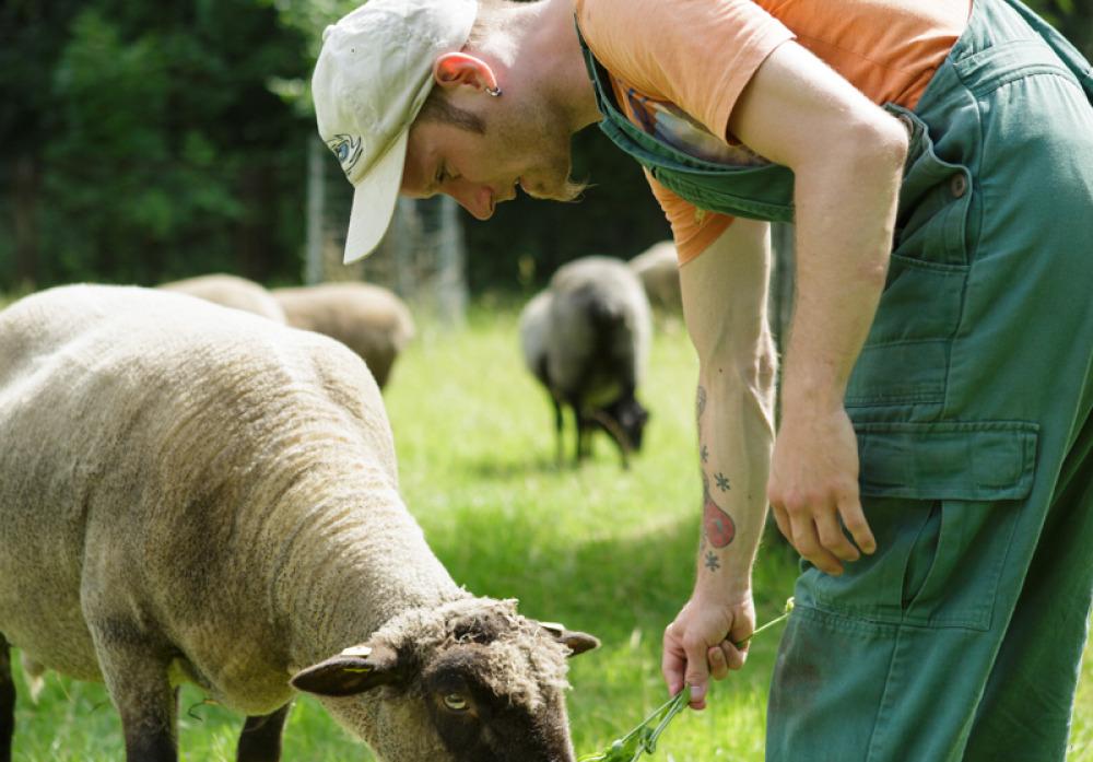 Mitarbeit bei der Schafspflege